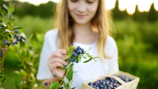 Berries anthocyanins